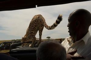 African Horizons Travel and Safari